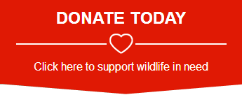 Wilvos Wildlife Donations